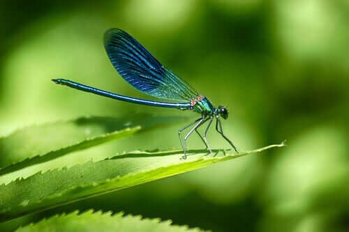 A dragonfly perched on a leaf.