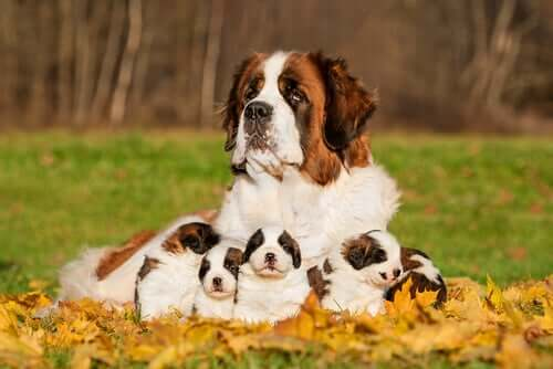 A mother and her puppies.