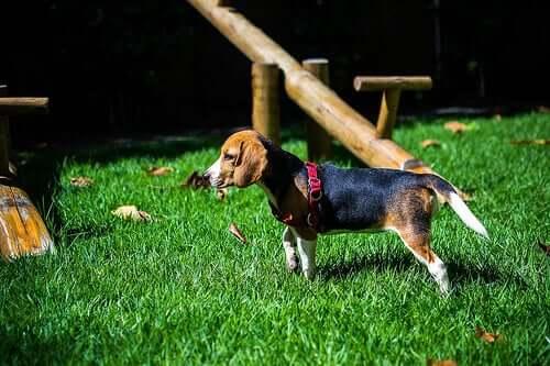 The Most Popular Dog Breeds – Characteristics