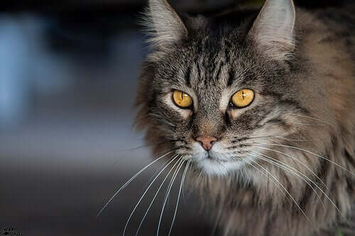 A cat staring intently.
