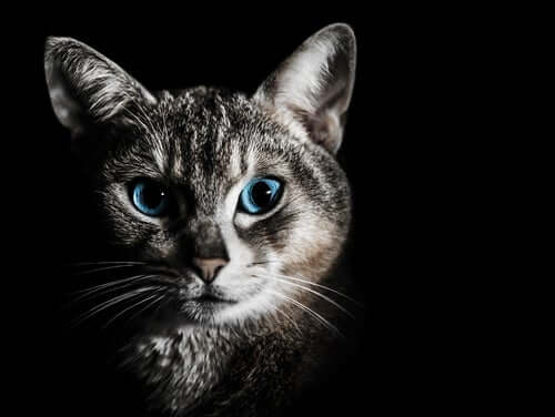 A cat in the dark.
