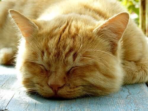 Facts about Cat Sleeping Habits