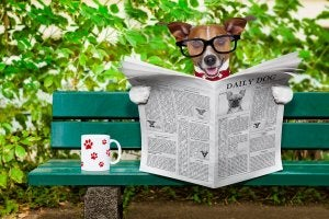 A dog reading a newspaper.