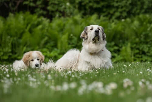 An adult dog and a puppy sitting together in a field.