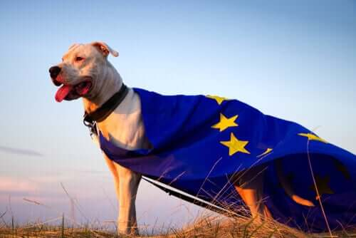 A dog wearing a European Union flag around its back.