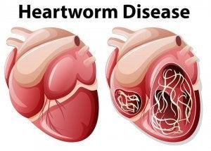 Heartworm disease.