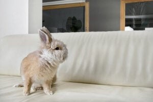 A rabbit on a couch.