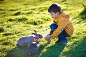 A boy feeding his pet rabbits.