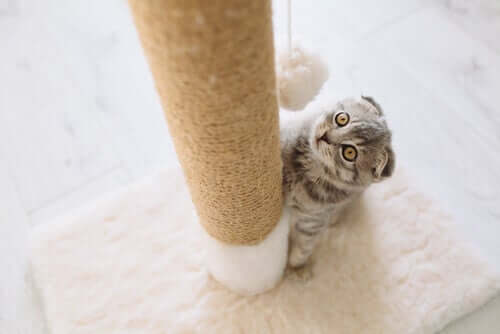 All about Scratching Posts for Cats