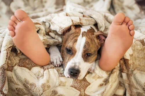 The Big Question: Is It Safe to Sleep With Your Pet?