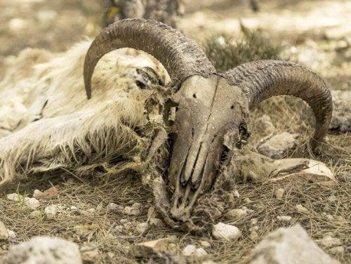 A carcass.