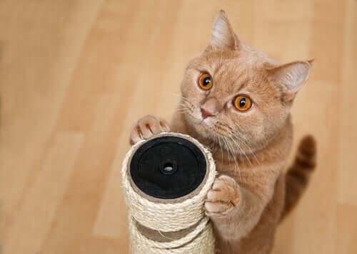 A cat scratching a post.