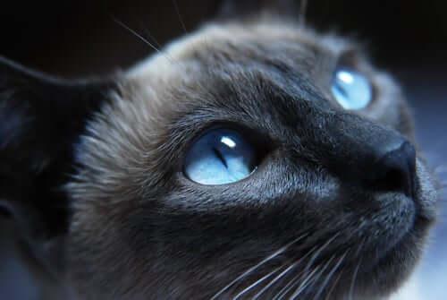 A closeup of a cat.