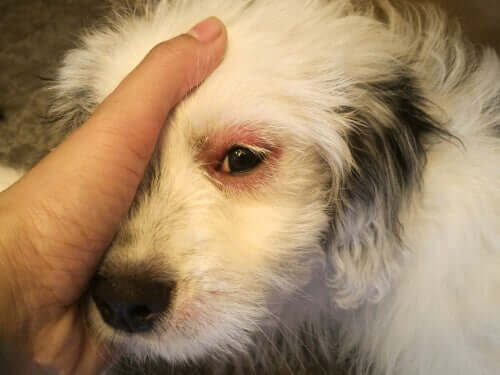 A hand covering a dog's eye.