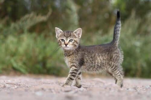 A kitten in a field.