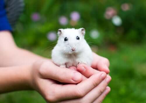 A person holding a rodent.