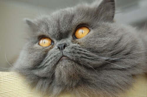 The Most Popular Cat Breeds Out There