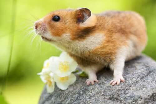 A rodent on a rock next to a flower.
