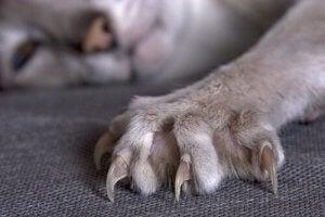 Retractable claws.