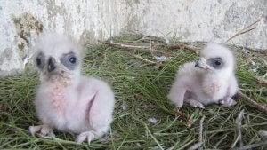 Wildlife rehabilitation centers care for orphaned animals.