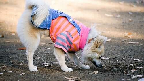 Fall Fashion: The Latest Trends for Your Dog