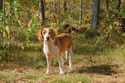 Group 6 Dogs: Breed Classification According to the FCI