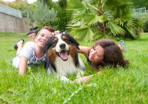 Big Dog or Small Dog: A Kid's Best Friend