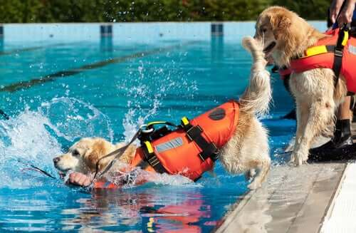 Rescue dogs training in a pool.