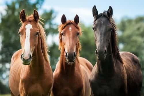 Three horses in a row.