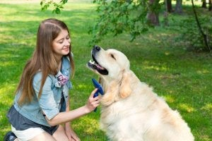 A girl brushing her dog.