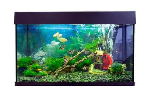 Fish Tank Setup - How to Do It Properly