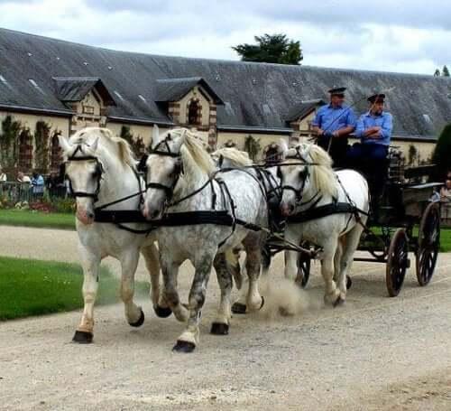 A horse drawn cart.