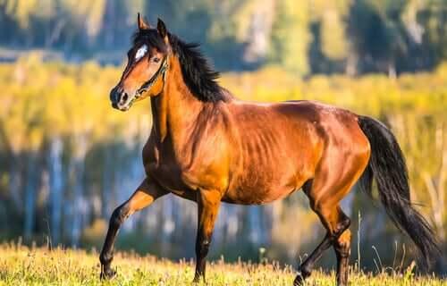A horse in a field.
