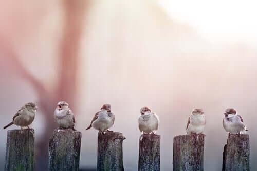 A line of birds.
