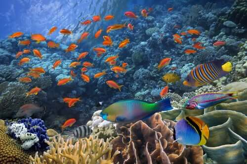 Fish Reproduction - All You Need to Know
