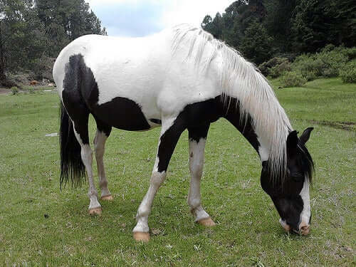 Horse Selection - Things to Consider