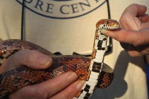 Everything You Need to Know About Basic Snake Care