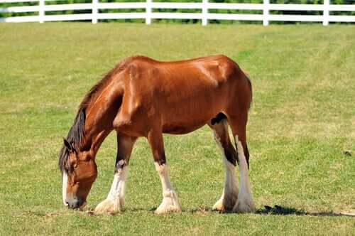 A beautiful horse in the pasture grazing.