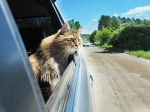 A cat in a car.