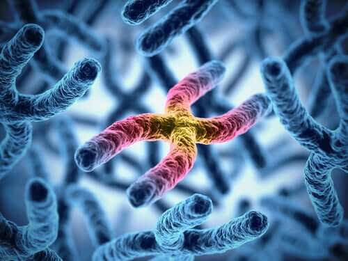 The relationship between chromosomes and longevity.