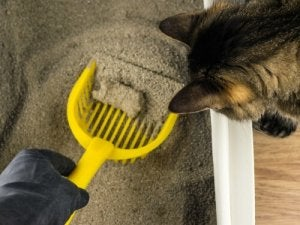 Cleaning out a cat's litter tray.