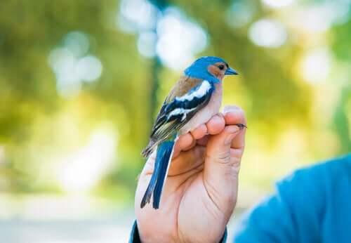 A beautiful bird posing on a hand.