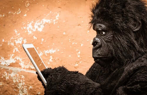 A gorilla using a cell phone.