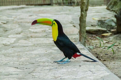 Creating the Ideal Environment for Exotic Birds