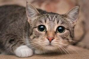 An anxious cat.