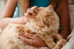 A girl stroking a ginger cat.