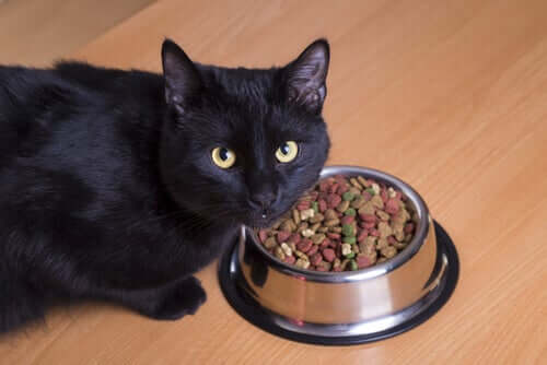 A cat next to a food bowl full of dry food.