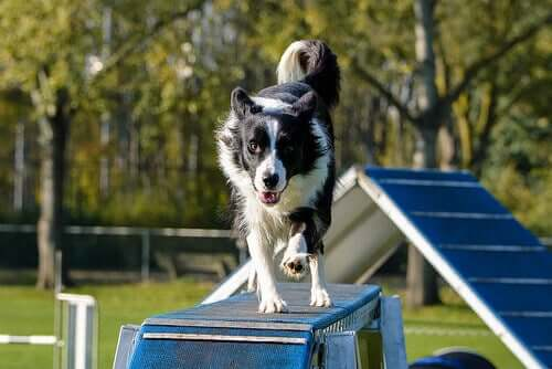 8 Unwritten Rules for Dog Parks