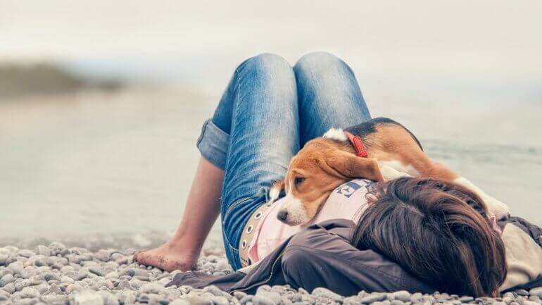 A dog lying on a pebble beach with their owner.