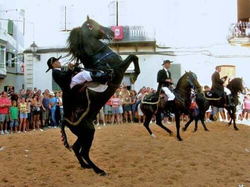 Spanish Horse Breeds